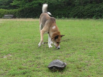 亀に近寄れないジョン