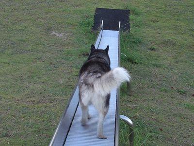 滑り台を降りる北斗