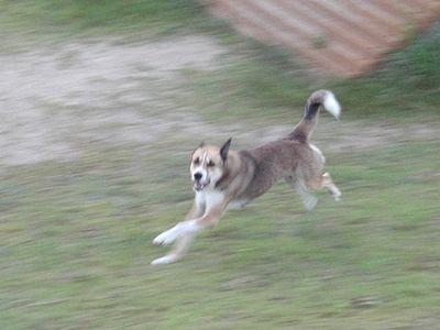 走るジョン