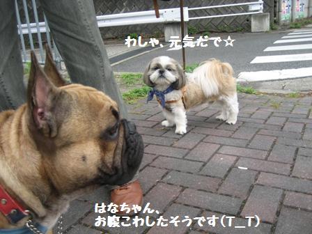 IMG_9046.jpg