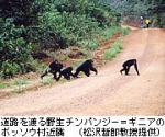 野生チンパンジーが役割分担