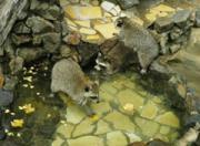 宮崎市フェニックス自然動物園で