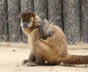 東区西戸崎の国営海の中道海浜公園内「動物の森」で