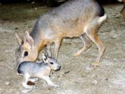 狭山市の智光山公園こども動物園