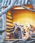 19日、石川県能美市のいしかわ動物園で