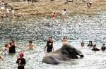 ゾウの海水浴=勝浦市吉尾で
