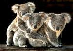 オーストラリアの動物園で
