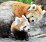 山口県周南市の徳山動物園で