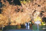 埼玉県神川町矢納の城峯公園