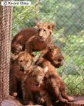 中国海南省海口市の海南熱帯野生動植物園で
