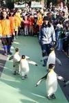 東京都台東区の上野動物園で、山本晋写す