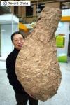 北京自然博物館に展示された、巨大なハチの巣