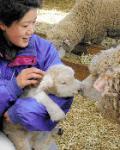 富津市田倉マザー牧場で  コリデール種の羊の赤ちゃん