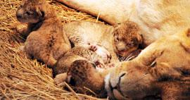多摩動物公園提供
