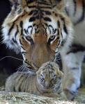 仏北東部アムネビルの動物園で