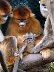 横浜市旭区 よこはま動物園ズーラシアで