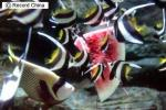 福建省福州市の水族館「海底世界」で