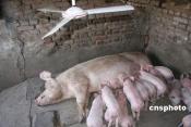 黒龍江省ハルビン市のある村の民家で