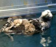 アクアワールド県大洗水族館で 水族館提供