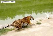 山西省の太原動物園で
