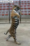 山東省済南市にある動物園「野生動物世界」で
