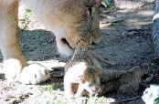 秋田市浜田の大森山動物園で