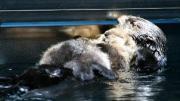 アクアワールド県大洗水族館提供