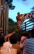 愛媛県立とべ動物園で
