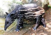 静岡市駿河区池田の日本平動物園で