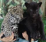 重慶市の野生動物園で