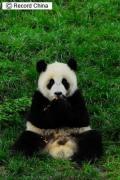 胡主席のおみやげ、パンダの「ワンワン」と「フーニー」