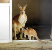 12日、長野県須坂市の須坂市動物園で