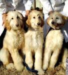 ソウル大獣医学部 メスのクローン犬が誕生