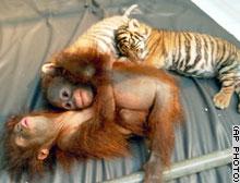 インドネシアのタマン・サファリ動物園で