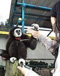 京都府福知山市動物園で