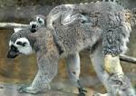 徳島市渋野町のとくしま動物園で