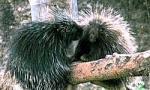 高知県香南市野市町の県立のいち動物公園で