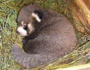 7月下旬、西山動物園提供