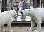 兵庫県姫路市本町の姫路市立動物園で