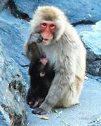 飯田市立動物園で