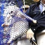 高所作業車で救出されたネコ 読売新聞