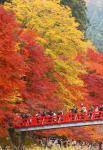 26日午前、愛知県豊田市で 11月27日asahi.com
