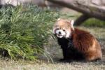 7日午後、大阪市天王寺区の天王寺動物園で
