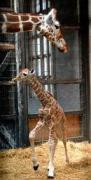 29日、京都市左京区の市動物園で