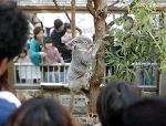 名古屋市千種区の東山動物園で