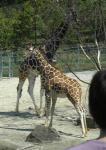 能美市のいしかわ動物園で