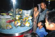 静岡市清水区の東海大海洋科学博物館で