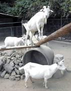 須坂市動物園で