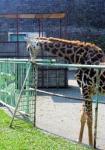 円山動物園で