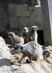 岡崎市東公園動物園で